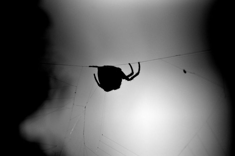 Black And White Cable Close-up Dark Garden Spider Illuminated Low Angle View Mission Impossible Nature No People Orb Web Spider Sky Spider Stealth Vignette Maximum Closeness