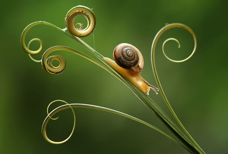 Close-up of snail on seedling