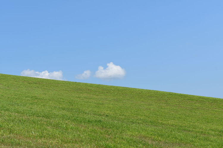 Sky Grass Land