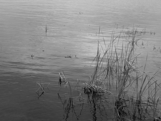 Nature Nature Photography Animal Balackandwhite Child Childhood Still Life Water