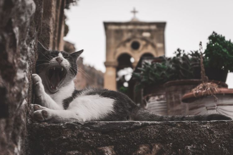Cat relaxing in a temple