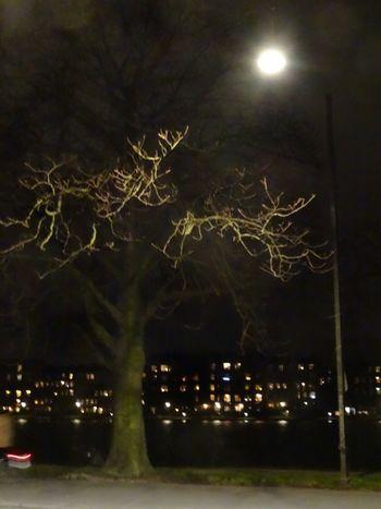 """Streetlight and winter tree"" Bright Cloudy Copenhagen, Denmark Dark Ethereal Glowing Illuminated Light M Moon Nature Night Night Sky Night View No People Tree Weather Winter"