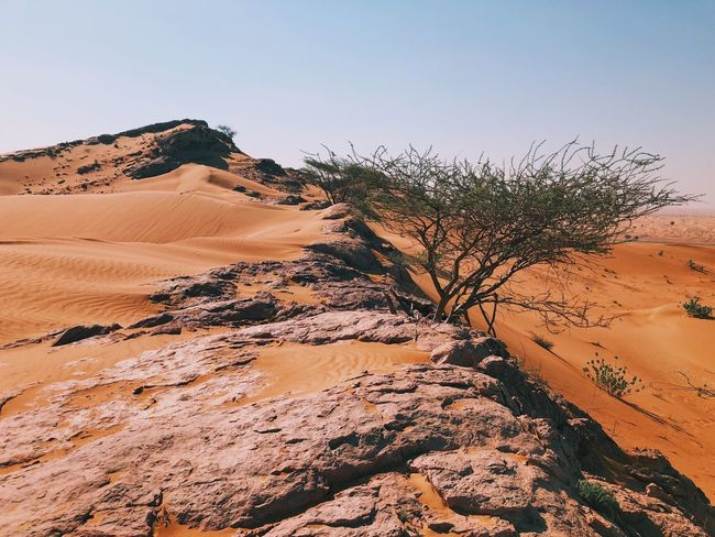 Living on the edge Landscape Nature Tranquil Scene Arid Climate Tranquility Scenics Shades Of Winter Beauty In Nature Rock - Object Desert Sand Outdoors Day No People Travel Destinations Sand Dune Physical Geography Clear Sky Sky Tree