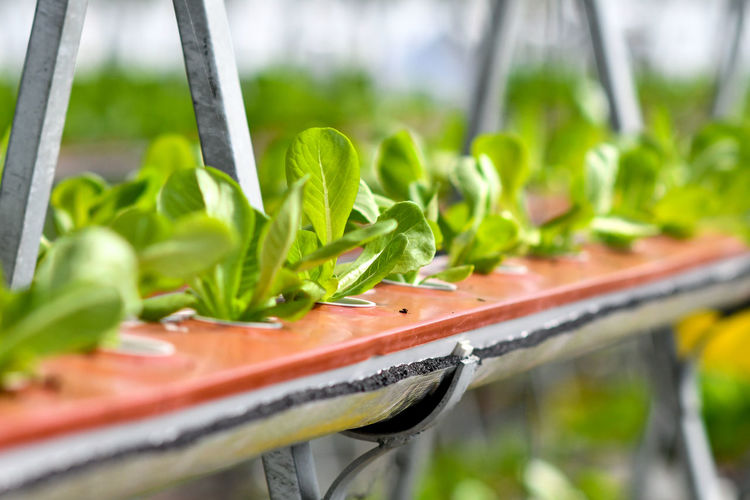 vertical farming Vertical Farming Vertical Farm Urban Gardening Urban Farming Urban Farm Agriculture Urban Agriculture Close-up Plant Green Color