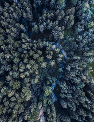 Drone  Backgrounds Beauty In Nature Close-up Day Forest Forest Photography Freshness Full Frame Germany Growth High Angle View Nature No People Outdoors Spruce Tree Tranquility Tree