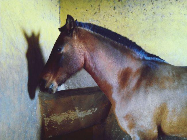 Enjoying Life Horses Caballos Caballo ESPAÑOL