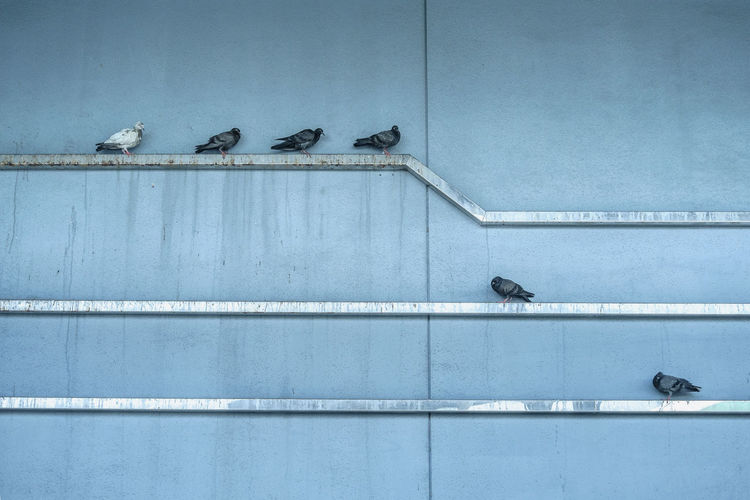 Animal Themes Animals In The City Architecture Bird Blue Building Exterior Built Structure Outdoors Perching Pigeon Texture