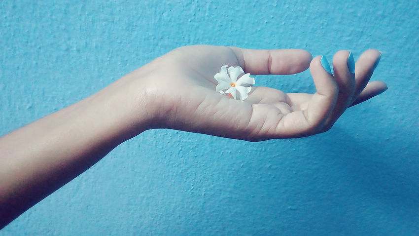 Human Hand Blue Human Body Part One Person Close-up Adults Only Women Only Women People Adult One Woman Only Day Indoors  Blue Color Blue Wall Wall Indoors  Fingernail Parijat Coral Jasmine Jasmine Collection Flower Night Flowering Jasmine Nature Jasmine