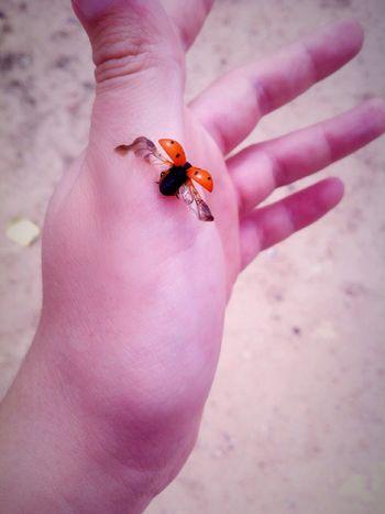 Ladybird Ladybirds 🐞 Ladybirds Mariquita Wings Beautiful Photooftheday Fly Nature Nature_collection