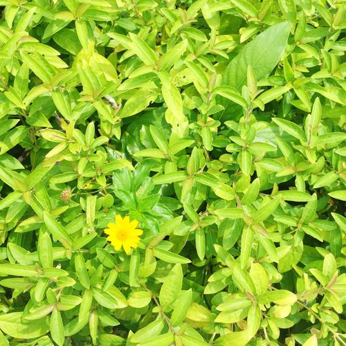 Colorful Vivid Plants And Flowers Minimal