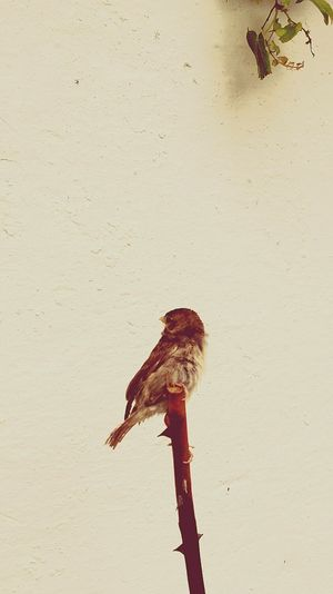 Pajaro Bird Eyemm Nature Lover Gorrion Sparrow PatioAndaluz Patios De Córdoba