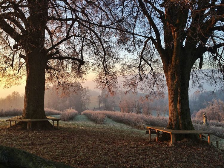 Morgenlicht an einem Wintertag Morning Light Bare Tree Branch Landscape No People First Eyeem Photo