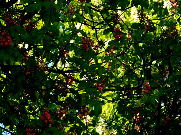 Low angle view of berries on tree