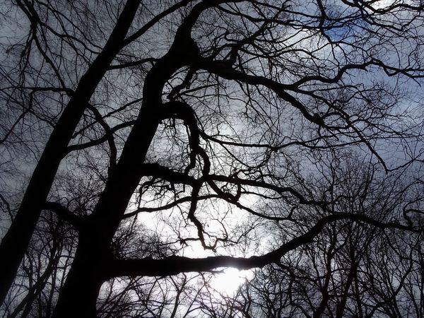 Evening Atmosphere Tree Nature Photography From My Point Of View StillLifePhotography Moments No People Beauty In Nature Outdoors Growth Bare Tree Taking Photos Silhouette Silouette & Sky