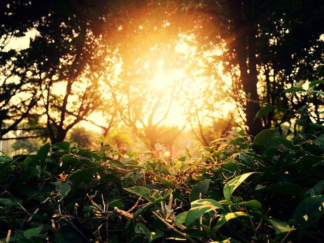 morning. Sun