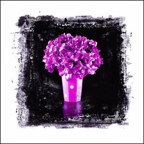 Hortensie Colorkey Art Still Life Graphic Design ArtWork Colors Blumen Purple Flower Flowers Hortensia