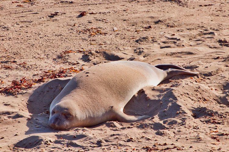 High angle view of animal lying on sand