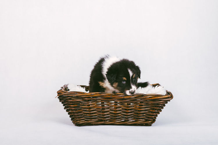 Close-up of kitten in basket against white background
