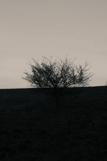 Art Bare Tree Beauty In Nature Branch Clear Sky Day Desaturated Isolated Landscape Lone Minimalism Nature No People Outdoors Scenics Sky Tranquil Scene Tranquility Tree