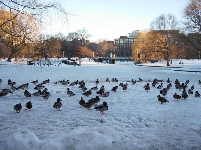 Birds in frozen lake against sky