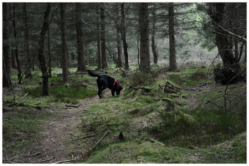 Outdoors Textures Tree Trunk Forest Woodland Flowers Light And Shadow Black Labrador Retriever Puppy Forrest Walk Kirriemuir Countryside Kate's Wood