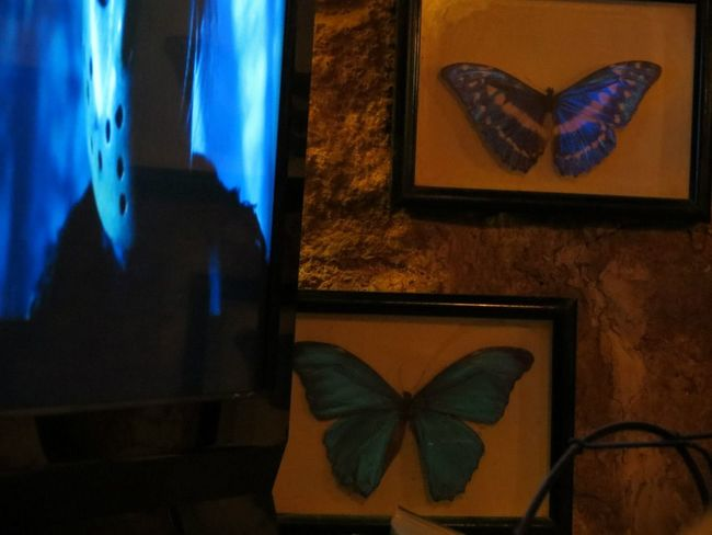 Blue match EyeEmNewHere Friday The 13th Jason Denayer💛❤ Architecture Blue Blue Matching Butterflies Butterfly Close-up Coincidence Coincidencetography Day Home Interior Indoors  No People Tv