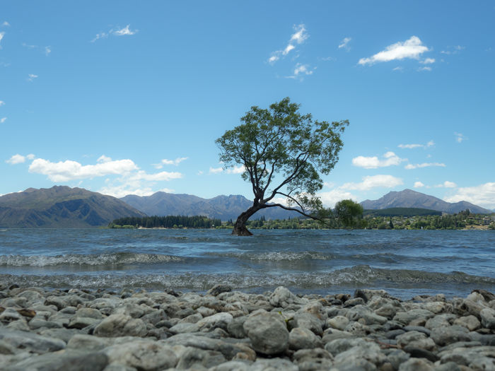 Let´s continue the walk around the legendary tree... New Zealand Beauty New Zealand Scenery Wanaka Beach Blue Sky Coast Lake Wanaka Lakeshore New Zealand Stones Wanaka Tree Wanakalake