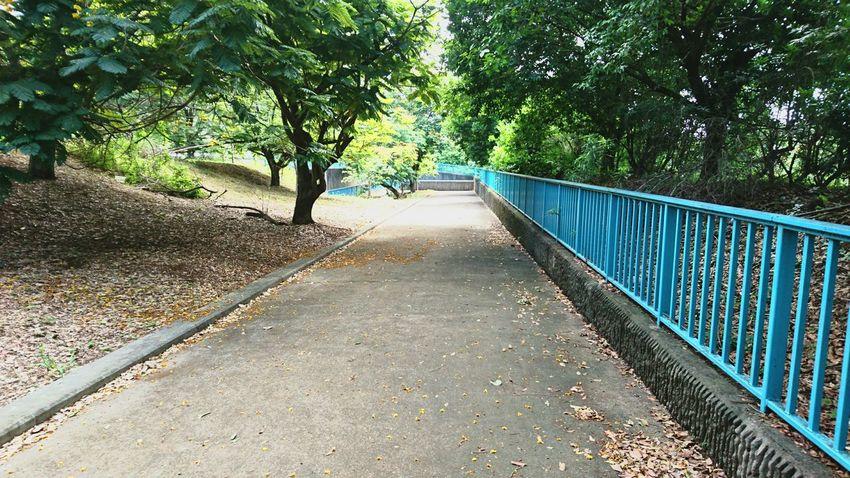 Not done walking yet 😶 Reunion Island Xperia Z5 Nature Walking Afterschool
