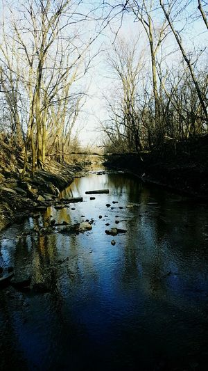 February 14.17Reflection Water Tree Nature Bare Tree Tranquil Scene No People Scenics Outdoors Wilderness Tranquility Day Floating On Water Beauty In Nature Sky Creek Rocks Beauty Eldridge Park At Dusk Eldridge Woods Nature Tree Freshness Beauty In Nature