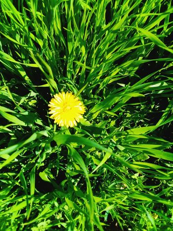 Flower Growth Nature Freshness Yellow Beauty In Nature Fragility Green Color Plant Leaf No People Flower Head Outdoors Blooming Close-up Day