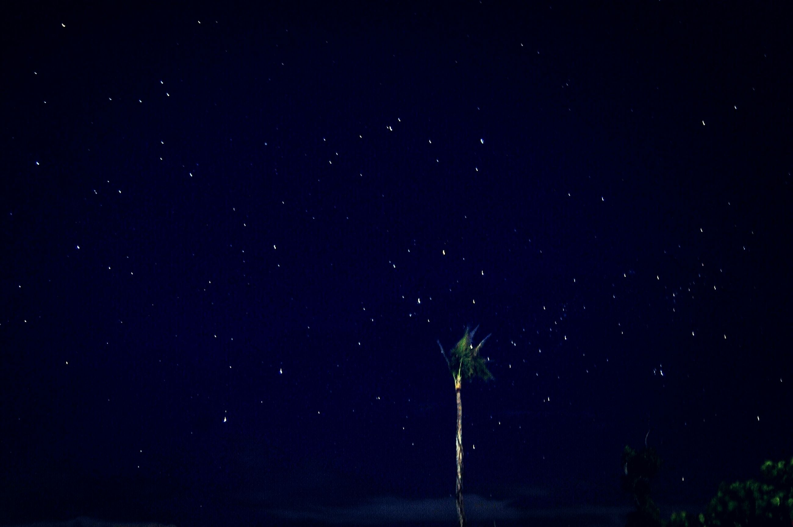 night, star - space, astronomy, low angle view, star field, beauty in nature, tranquility, tranquil scene, scenics, nature, sky, star, galaxy, space, tree, infinity, dark, idyllic, growth, silhouette