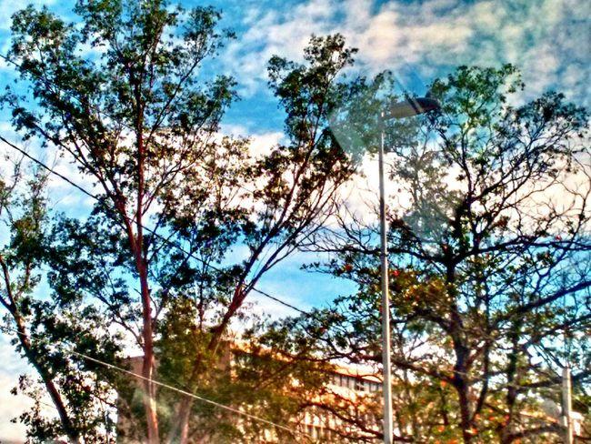 Rio De Janeiro Trees Sky And Clouds