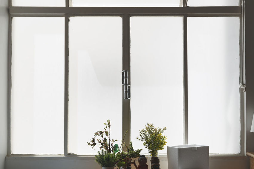 Architecture Close-up Day Growth Home Interior Indoors  Nature No People Plant Potted Plant Window