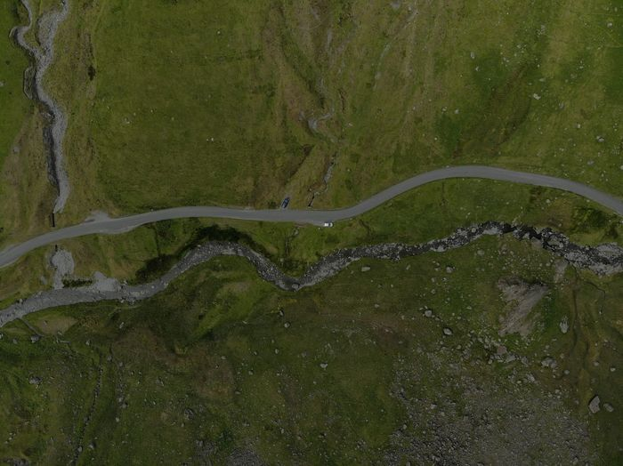High angle view of moss on road