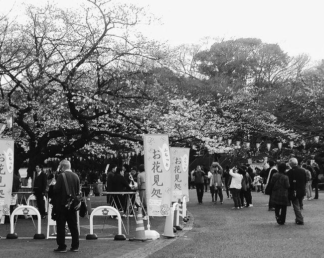 Tokyo Japan Uenopark2016 Streetphotography Naturelover Spring EyeEm Bnw EyeEm Japan EyeEM Tokyo EyeEm Gallery Bnw Bnw_society Bnw_streetphotography Bnw_collection Bnw_captures Cherry Blossoms Tokyospring2016 Ueno Park Tokyouenospring2016