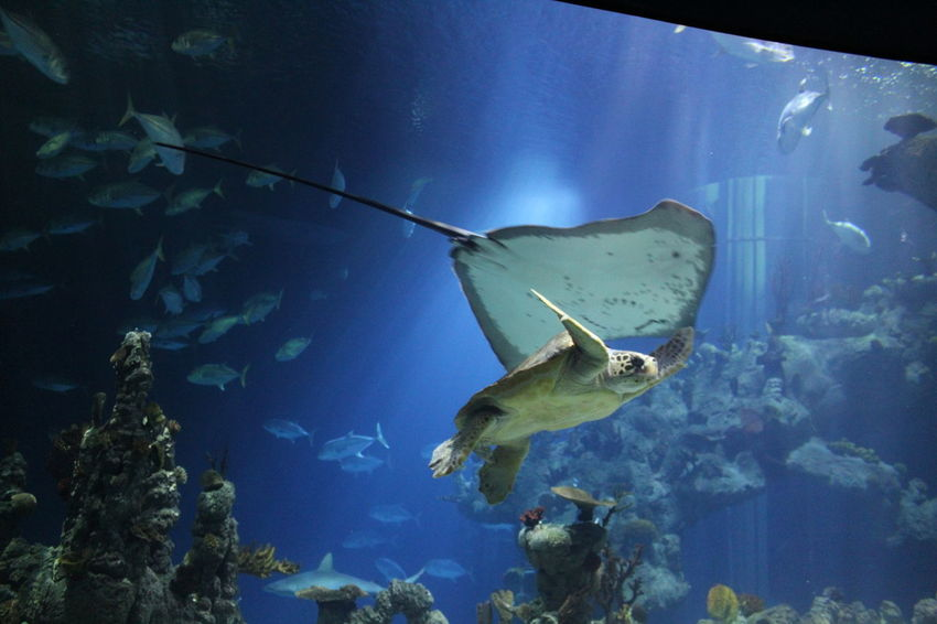Turtle Stingray Aquatic The Deep Hull UnderSea Sea Life Aquarium Fish Underwater Fishes Swimming Animal Sea Turtle