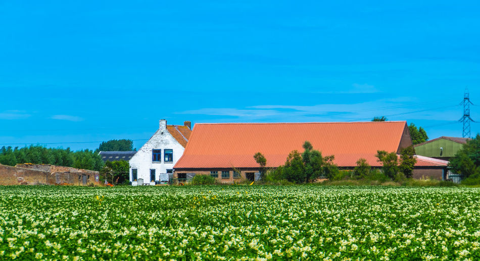 Scenic view of field by houses against blue sky