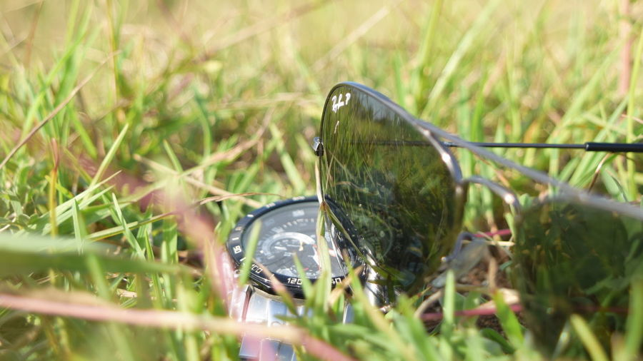 Day EDIFICE CASIO Nature Nikond5300 Nikonphotography Outdoor Photography Sunglasses Vnphotography