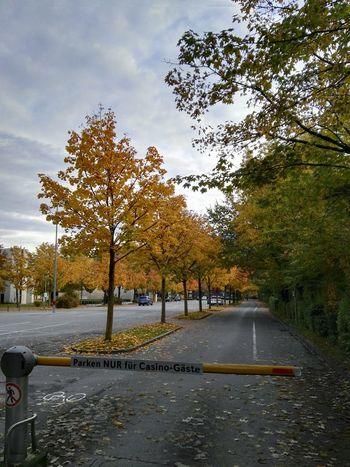 Autumn Colors Deep Perspective Empty Places Parking Area For Guest Only No People Outdoors Nature Day Travel Cold Day Bregenz Casino Backyard