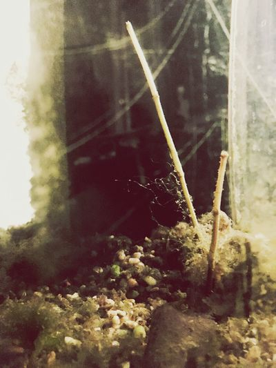 Plant Nature Close-up Growth No People Day Indoors  Surrealism Surreal Alien