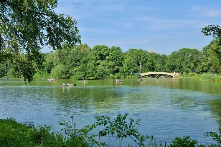 Swan on lake by trees against sky