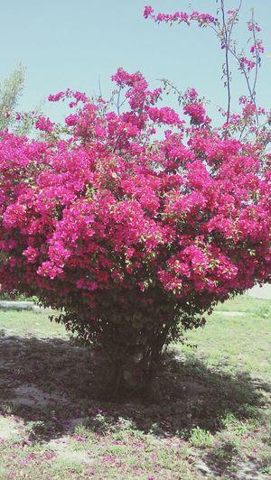 arboles magicos Tree