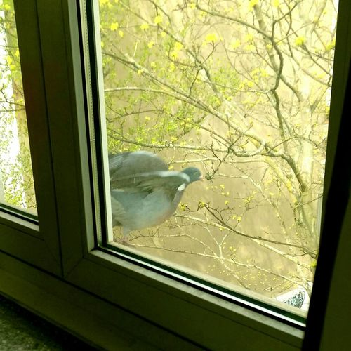 Life In Motion Keepmoving Pigeon From My Window