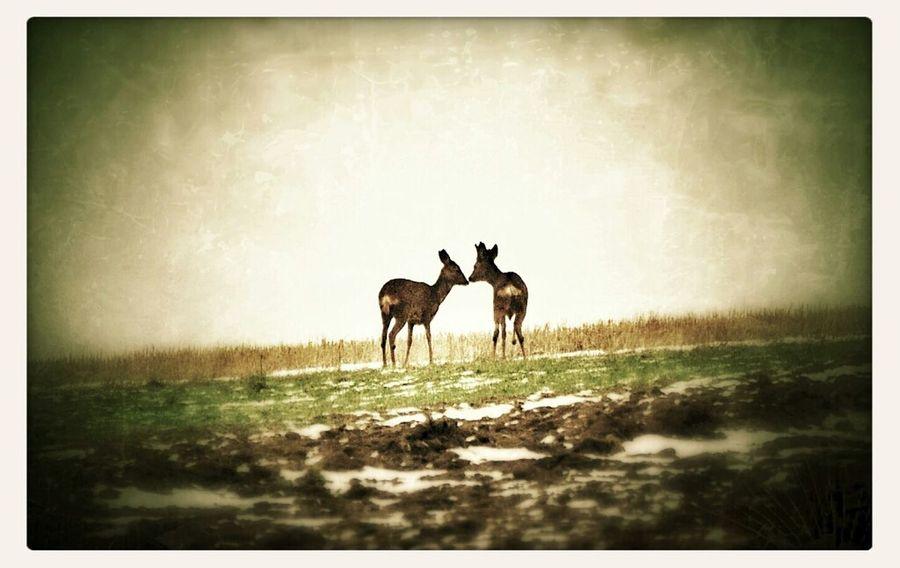 Animals Wildlife Eye4enchanting