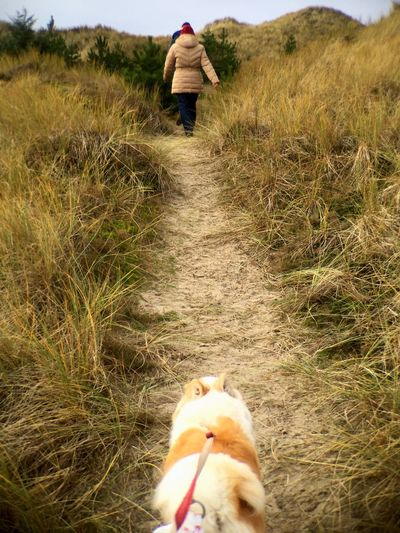 Dog Walking Dunes On A Hike Nature