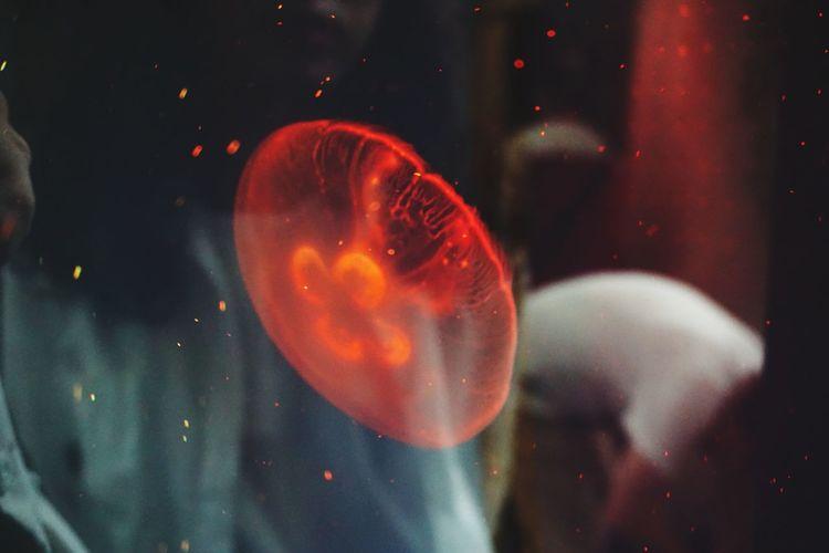Light Jellyfish