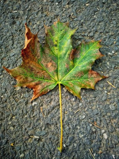 autumn leaf...