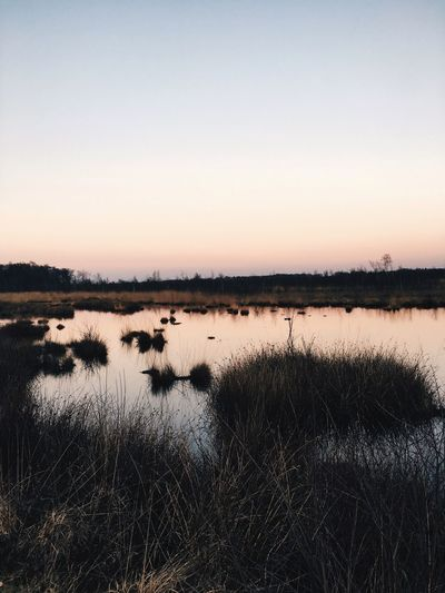 Nature Tranquil Scene Tranquility Lake Beauty In Nature Scenics Grass No People Outdoors Water Sunset Landscape Sky Clear Sky Day Animal Themes Beauty In Nature Beautiful VSCO Backgrounds