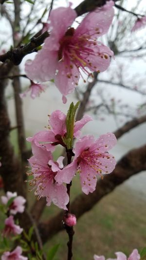 Flower Head Flower Tree Springtime Pink Color Blossom Petal Close-up Plant EyeEmNewHere