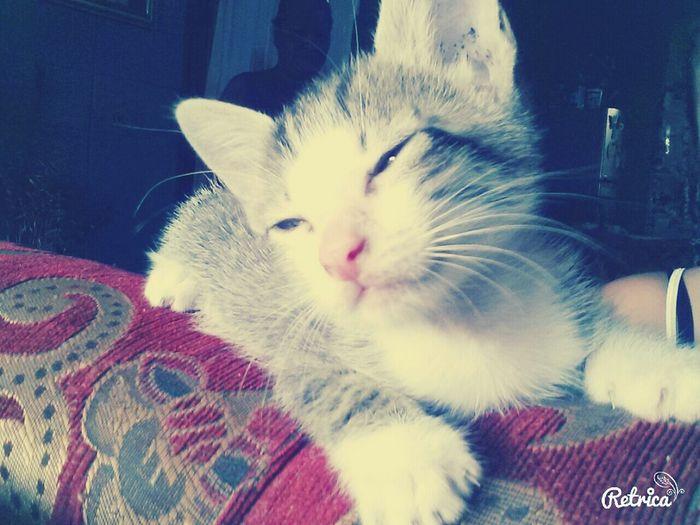 Sweet Babycat